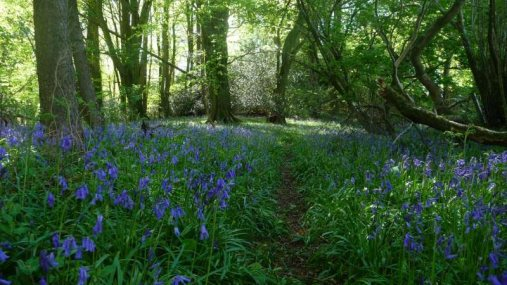bonhays-meditation-and-retreats-bluebell-woods-a-short-walk-away
